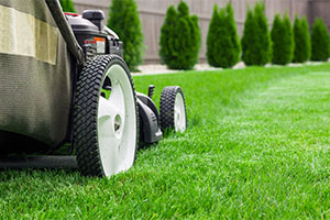 Acorn Landscaping provides landscaping services like lawn cutting